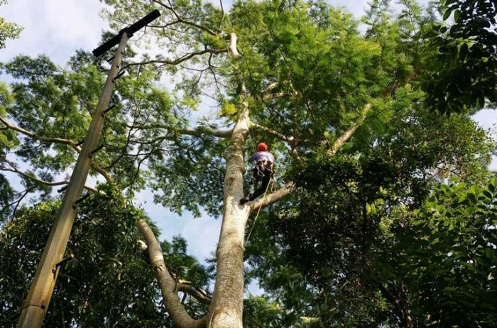 Tree Specialists in Paso Robles, CA